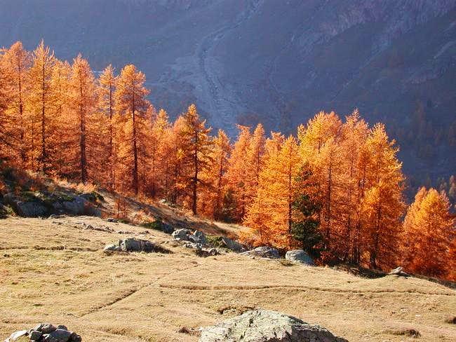 Trees like fire in Entrelor...