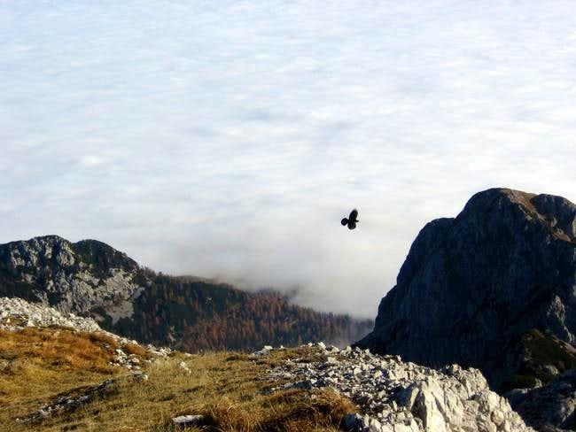 View from Vrh Hribaric (2388...