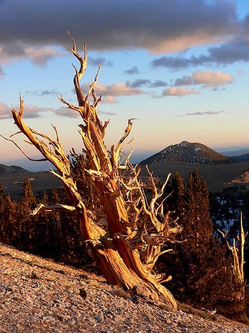 Blanco Mountain
