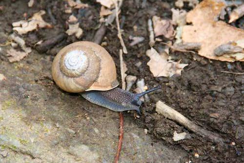 Trail snail