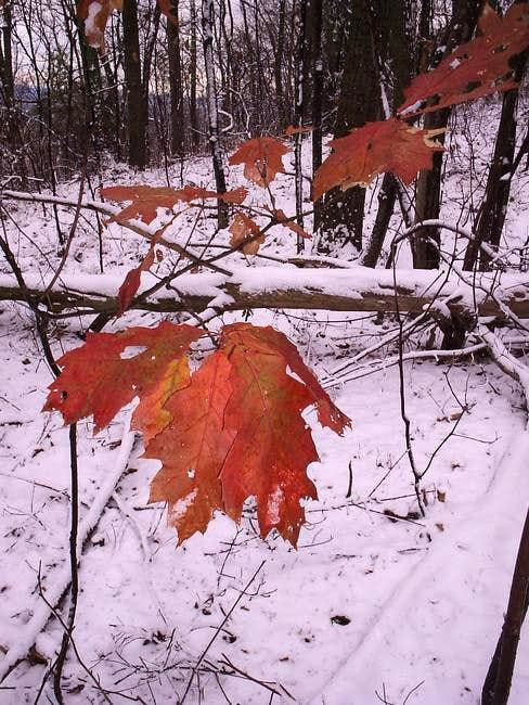 Fall to Winter! What a...