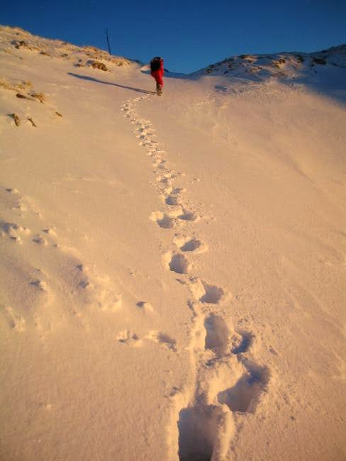 Footsteps in a snow in sunset...
