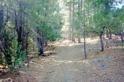 A view of the trail as it...