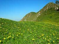 Northern Grigna. Grassy...