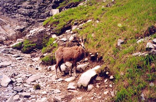 Tatra Chamois on the route to...