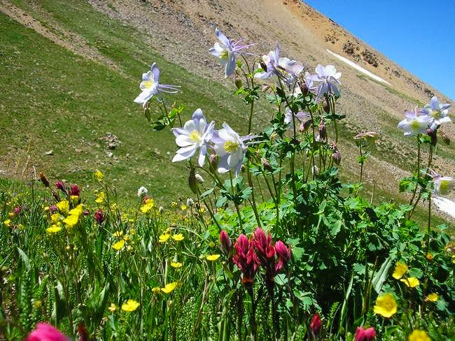 flowers on the slopes