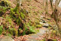Moss covered rocks along the...