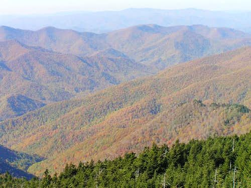 view of foliage from Mount...