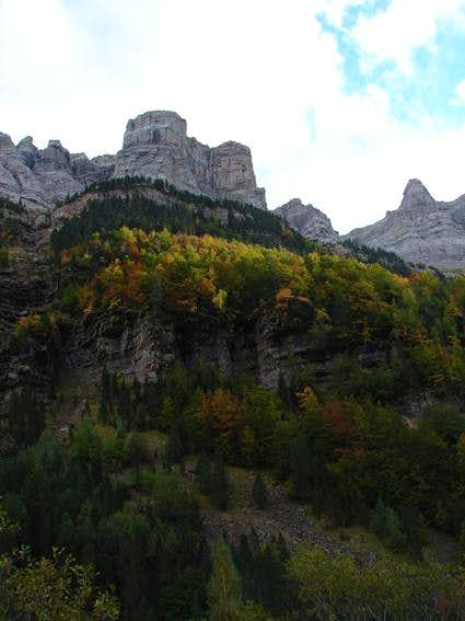 The forest of Ordesa's canyon...