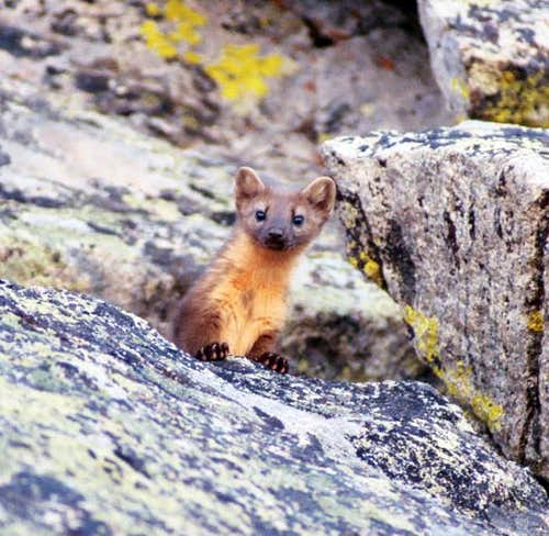 Another view of the marten we...
