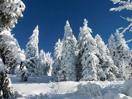 Near the Feldberg (December...