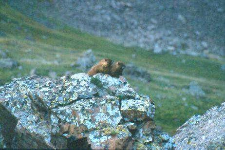 Marmots getting close on the...