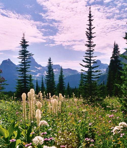 Looking over the wildflowers...