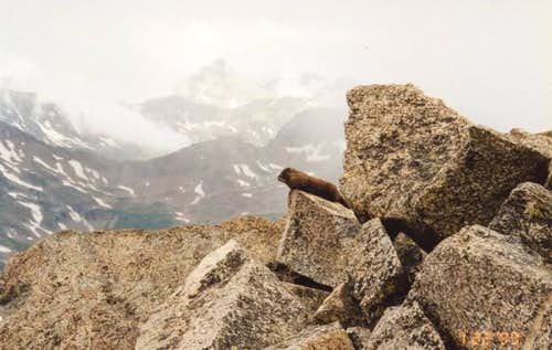 A marmot on the summit of...