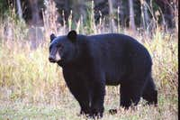 Black bear on the south side...
