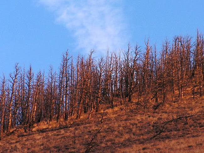 The desolate forest that...