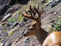 This HUGE deer always hangs...