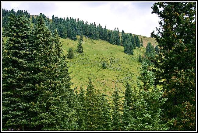 This nice elk path leads from...