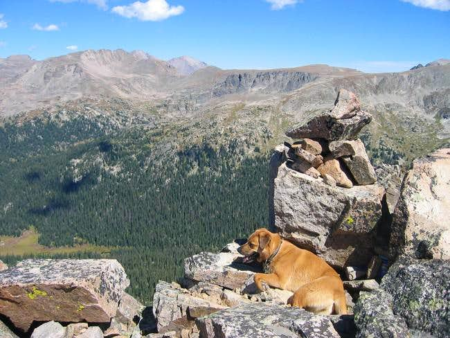 My dog on the summit of...