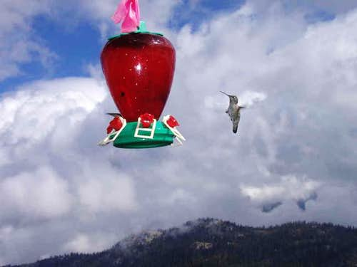 High Altitude Hummingbirds