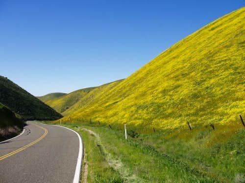 Wildflowers line Hwy 58 en...