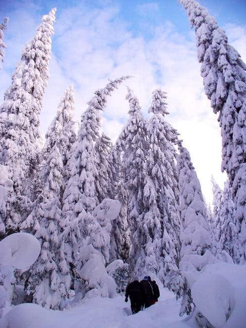 Winter trail at Choc...