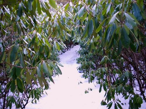 The Rhododendron Garden from...