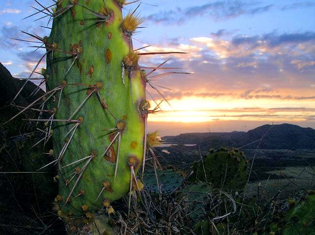 A cactus at the subsummit of...