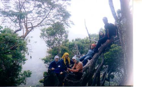 the fallen tree near Mt Gede...