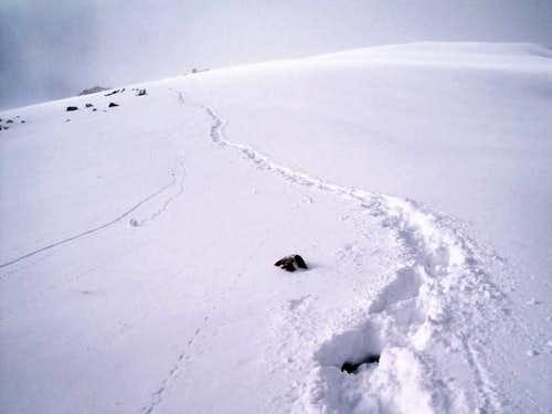 Tracks near summit of Mystic...