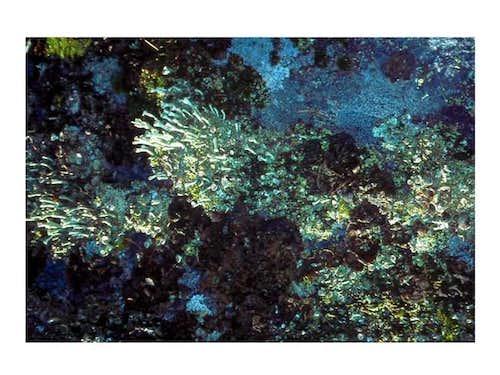 Lichens of Alpi Graie, July...