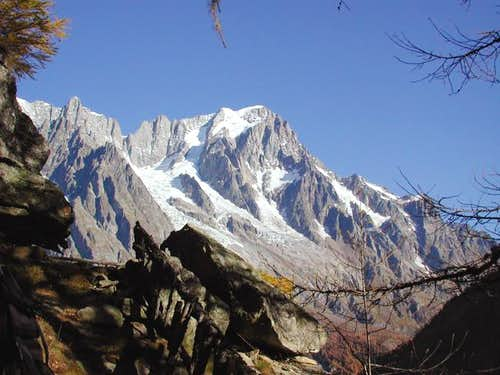 Grandes Jorasses between the larches