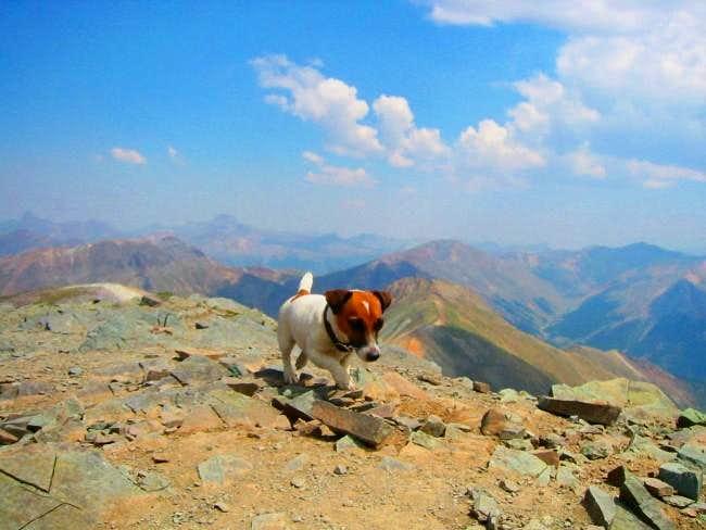 Lucy on Handies Summit.