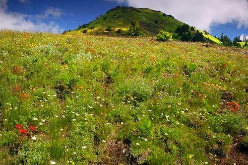 Cone Peak wildflower meadows...
