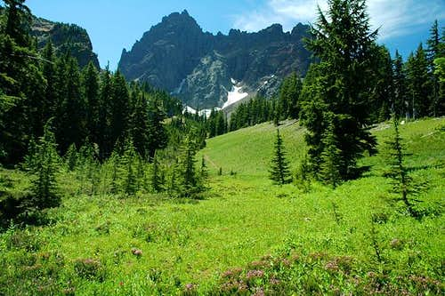 Three Fingered Jack from...