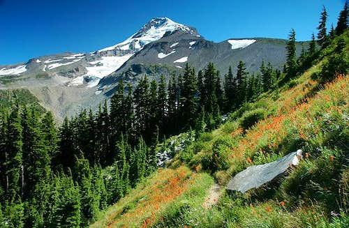 Mount Hood as seen from 99...