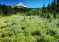 Mount Hood as seen from...