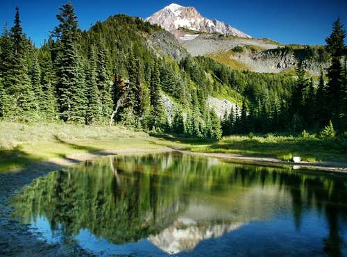 Mount Hood reflection in tarn...