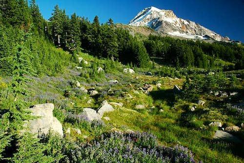 Mount Hood from Vista Ridge -...