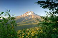 Mount Hood from the Tom Dick...