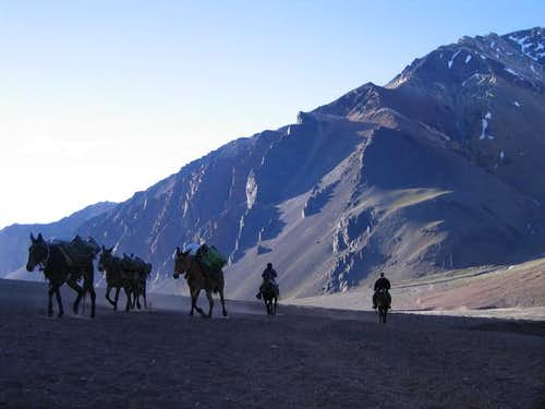Mules on their way up to...