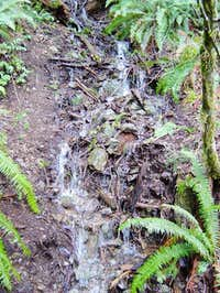 Sword ferns line small...