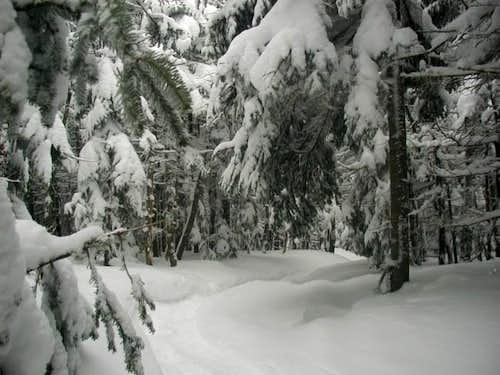 Crawford Path, Mount Pierce,...