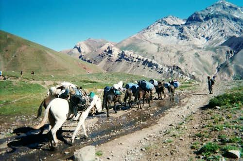 Herd of mules carrying loads...
