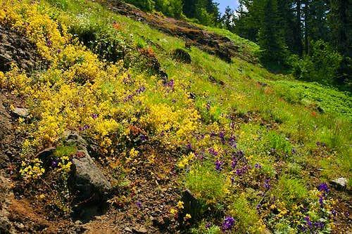 Wildflowers at Iron Mountain