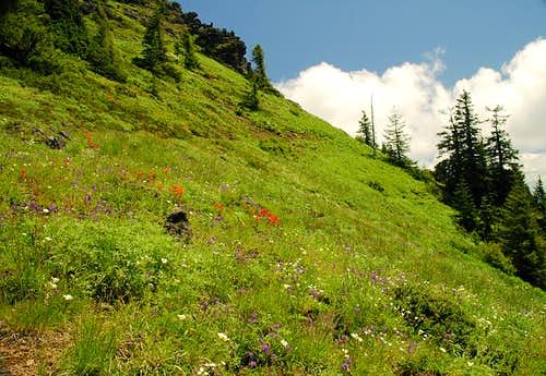 More Wildflowers at Iron Mountain