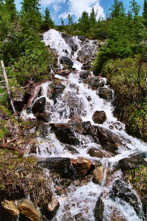 Spring ephemeral falls