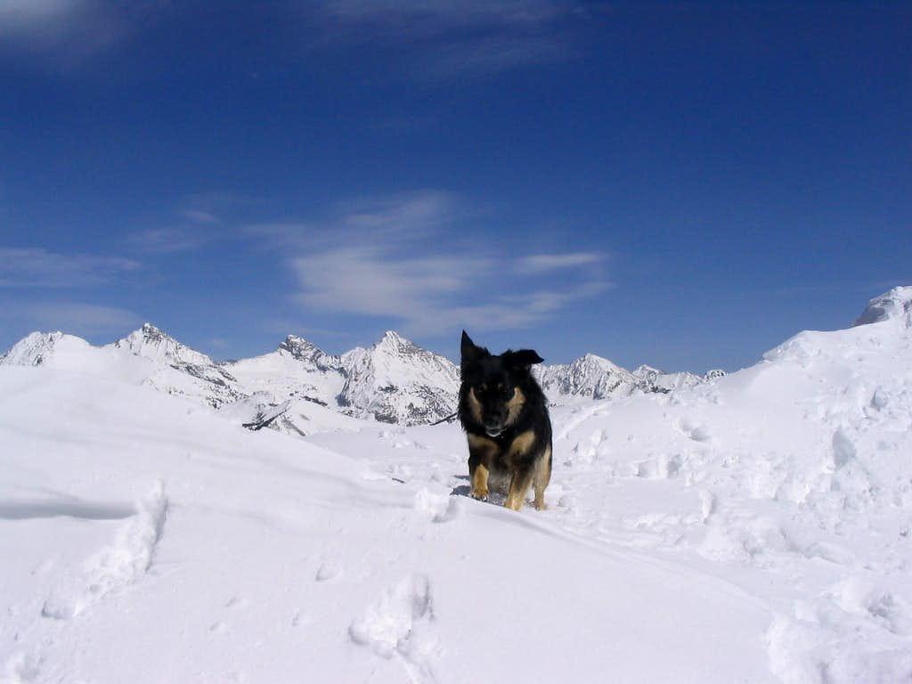Trail Dog Summits
