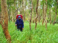 Hiking in stone birch forest
