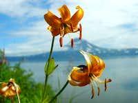 Lily at the Kuril Lake